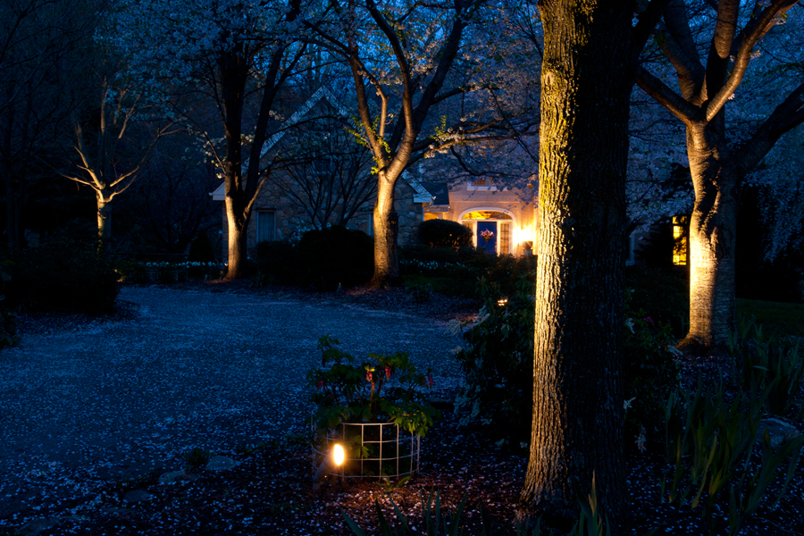Landscape Accent Lighting Greenline Lawn And